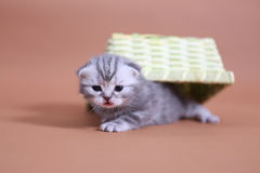 Cute baby cats Royalty Free Stock Image