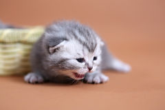 Cute baby cats Royalty Free Stock Images