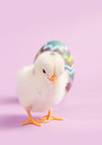 Cute baby chick on pink background Stock Images