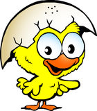 Cute baby chicken Stock Images