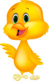 Cute baby chicken cartoon Stock Photos