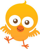 Cute baby chicken flapping and smiling enthusiastically Royalty Free Stock Photo