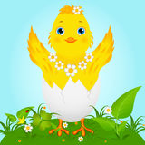 Cute Baby Chicken. Illustration of a cute happy little yellow Easter chick Stock Photography