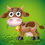 Cute baby cow chewing on a juicy grass Royalty Free Stock Image