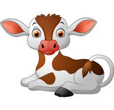 Cute baby cow sitting Royalty Free Stock Photo