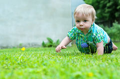 Cute baby crawling in the grass Stock Photography