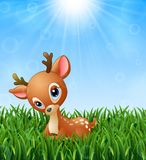 Cute baby deer cartoon in the grass on a background of bright sunshine Royalty Free Stock Image