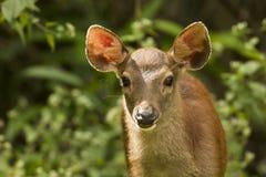 Cute baby deer. Cute little baby deer in forest. Photo taken on: December 09th, 2015 stock image