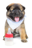 Cute baby of the dogs Stock Image