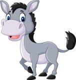 Cute baby donkey  on white background Stock Image