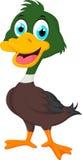 Cute baby duck cartoon Stock Image