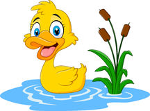 Cute baby duck floats on water. Illustration of Cute baby duck floats on water Royalty Free Stock Photo