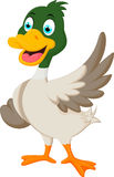 Cute baby duck waving hand Royalty Free Stock Photo