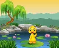 Cute baby duck waving on the lily water Stock Photography