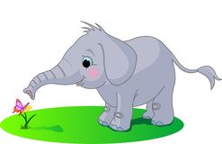 Cute baby elephant Stock Photography