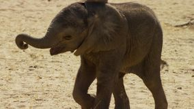 Cute baby elephant calf in this portrait image from South Africa stock photo