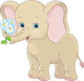 Cute Elephant Holding A Flower Royalty Free Stock Image ...