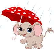 Cute baby elephant under umbrella vector illustration