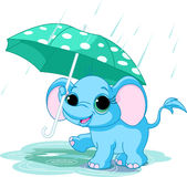 Cute baby elephant under umbrella Stock Image