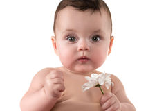 Cute baby with flower on the white background Stock Photo