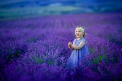 Cute baby in the flowering field of lavender. Cute baby in the flowering field of lavender royalty free stock images