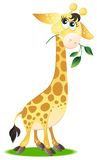 Cute baby giraffe Royalty Free Stock Image