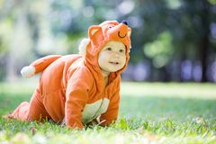 Cute baby girl dressed in fox costume crawling on lawn in park stock photography