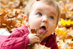 Cute baby girl eating autumn leaves stock photo
