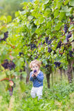 Cute baby girl eating fresh ripe grapes in vine yard. Cute funny baby girl eating fresh ripe grapes in a beautiful autumn vine yard Stock Image
