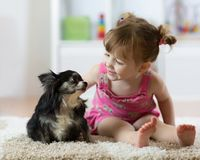 Cute baby girl looking at chihuahua dog. Closeup portrait. royalty free stock photos