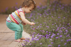 Cute baby girl picking flowers Stock Images
