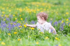 Cute baby girl playing with dandelions in a park Stock Photos