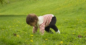 Cute baby girl playing with dandelions in the park.