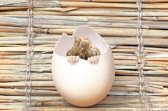 Hatched baby stock photography
