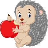 Cute baby hedgehog Royalty Free Stock Photos