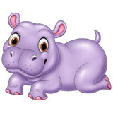 Cute baby hippo isolated on white background Stock Photography