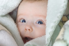 Cute baby infant royalty free stock image