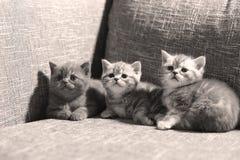 Cute baby kitten Stock Image