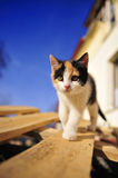 Cute baby kitten cat and blue sky. In Summer royalty free stock photos
