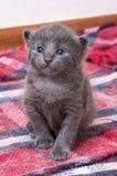 Cute kitten baby cat. The cute baby kitten cat. Pet animal royalty free stock photos