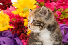 Cute baby kitten and flowers Royalty Free Stock Image
