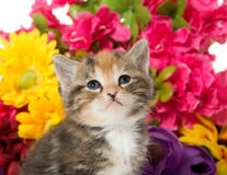Cute baby kitten and flowers Stock Photos