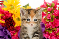 Cute baby kitten and flowers Royalty Free Stock Photography
