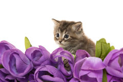 Cute baby kitten and flowers Royalty Free Stock Photo