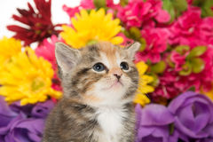 Cute baby kitten and flowers Royalty Free Stock Photos