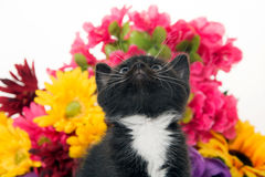 Cute baby kitten and flowers Stock Image