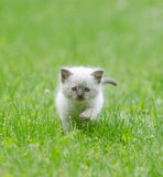 Cute baby kitten in the grass Royalty Free Stock Images