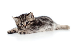 Cute baby kitten lying on floor. Over white background royalty free stock photography