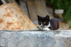 Cute baby kitten playing Stock Photography