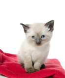Cute baby kitten on red blanket Royalty Free Stock Image